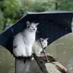 Un chat peut-il vraiment annoncer la pluie ?