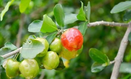 Quels sont les fruits champions en vitamine C ?