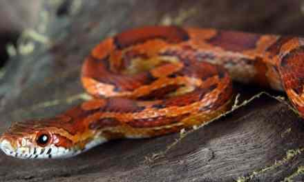 Une randonneuse se prend un serpent sur la tête dans le Var. Plus de peur que de mal!