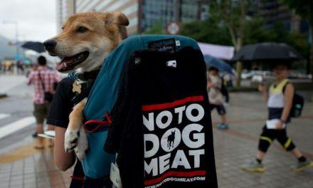 Corée du Sud : fermeture du plus grand complexe d'abattage de chiens