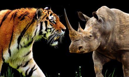 Tigre et rhinocéros: la Chine maintient l'interdiction du commerce
