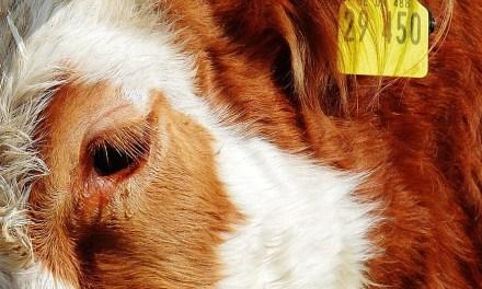 Louis Schweitzer se met au service du bien-être animal