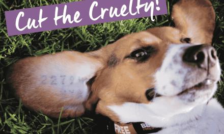 Liste des entreprises qui continuent à faire des tests sur les animaux. A éviter donc.