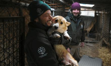 200 chiens sauvés de l'abattoir en Corée du Sud