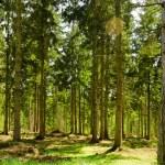 L'Angleterre va planter 50 millions d'arbres pour créer une forêt entière dans le nord du pays