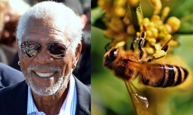 Morgan Freeman convertit un ranch de 124 hectares en sanctuaire pour sauver les abeilles