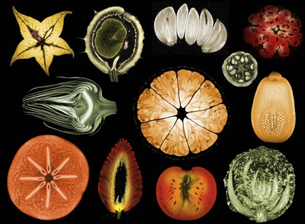 Collage of mixed fruits and vegetables, MRI, by Wellcome Images.
