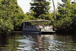 Boat Charters on the Loxahatchee River