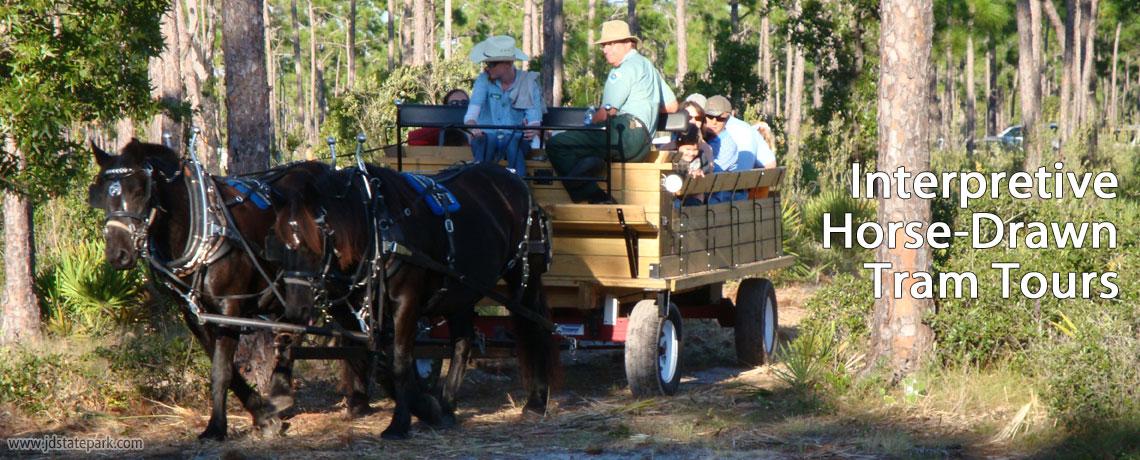Interpretive Horse-Drawn Tram Tours   Jonathan Dickinson State Park, Hobe Sound, FL