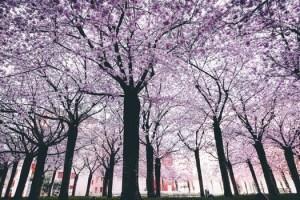 jd_tree_bereavement_counselling