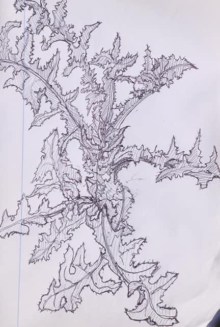 Un jeune chardon, crayon bic sur papier margé, Erolf Totort