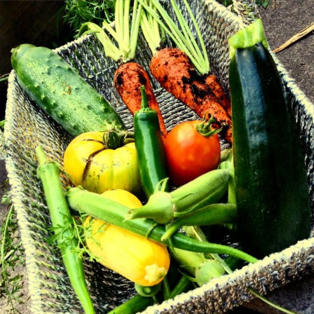 Basket of garden goodies for a summer dinner