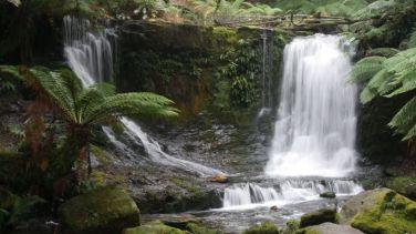 Waterval in Tasmania, Australië in een regenwoud
