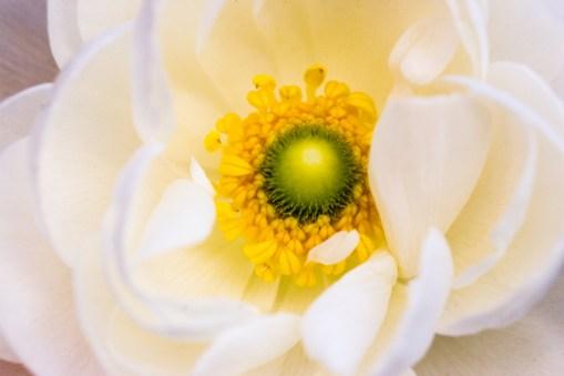 PORTFOLIO: Flowers
