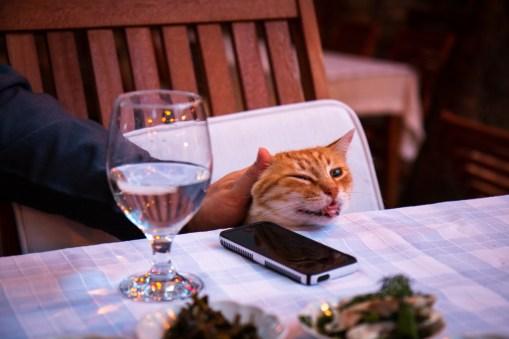 Cat at Giritli Restaurant