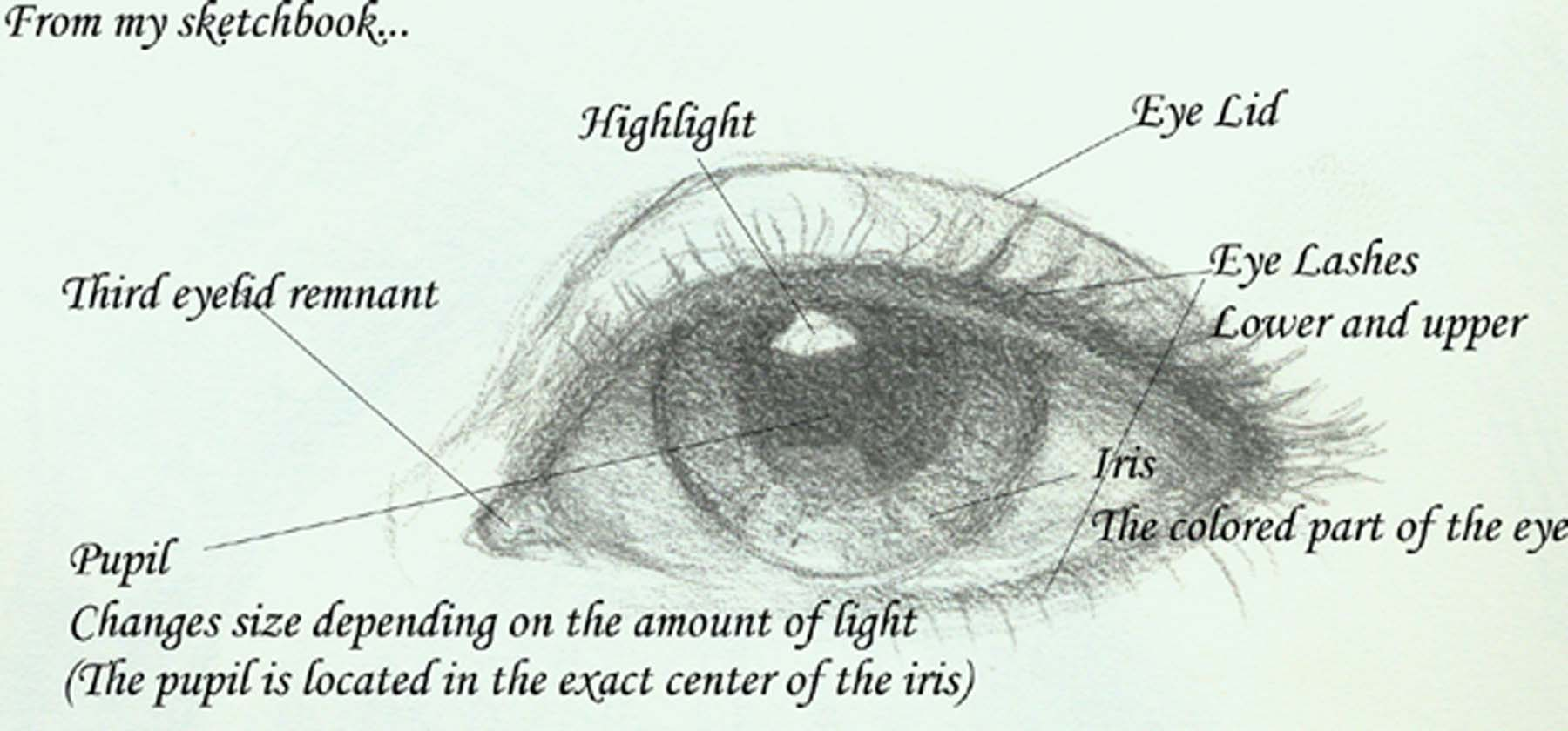 Eye Diagram With Labels
