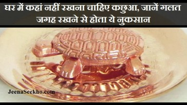 Where To Place Tortoise In Home