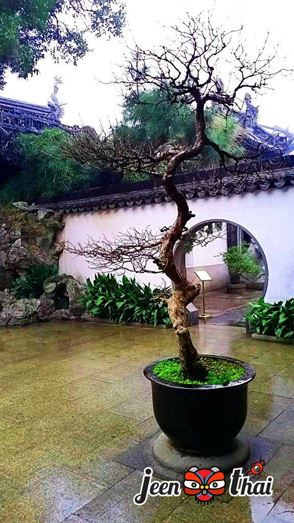 สวนหยู้หยวนที่เซี่ยงไฮ้ Yuyuan Garden in Shanghai 豫园