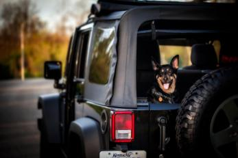 JeepWranglerOutpost.com-jeep-fun-h (64)
