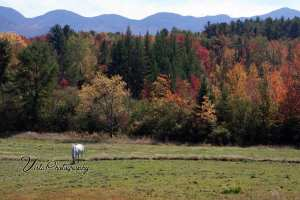 Good foliage view of Sugar Hill New Hampshire