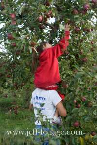 Father gives his daughter a boost up to pick the really good fall apples
