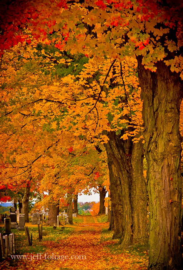 a fall foliage path lined with orange and yellow maples leads off into the distance