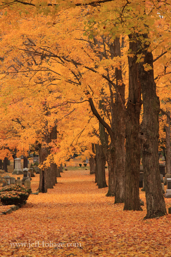 orange and gold leaves cover the ground of this cemetery with tall stately trees standing guard over the graves