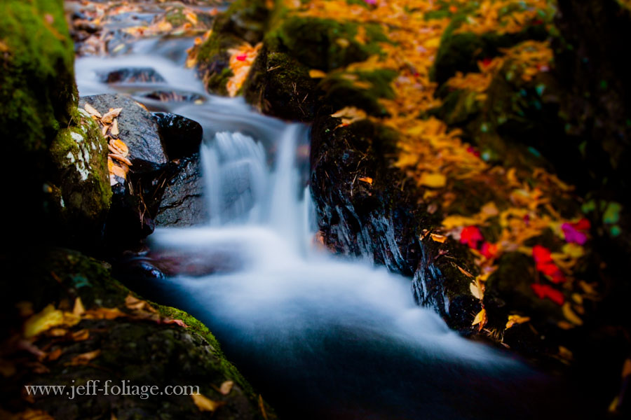 small stream surrounded by fall foliage colors and fallen leaves from red and yellow Maples
