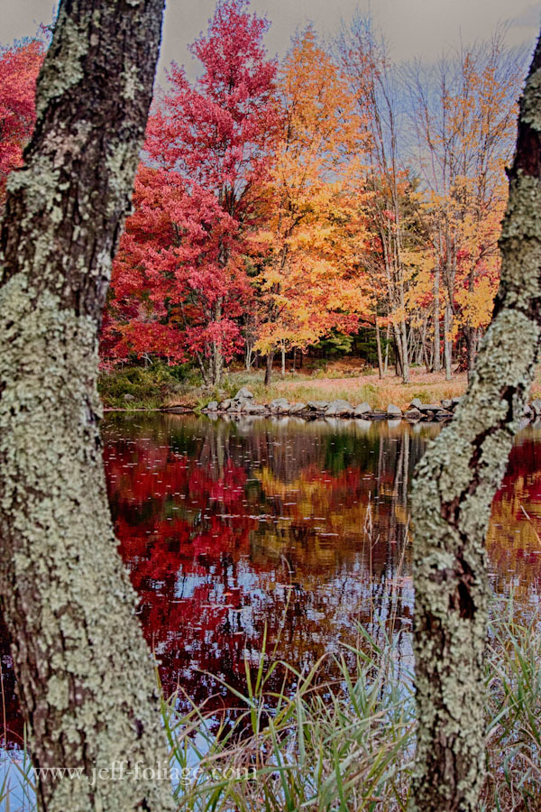 view of the mill pond with red and gold Maples at the edge