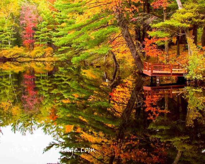 Fire pond fall foliage 9 Oct 2004