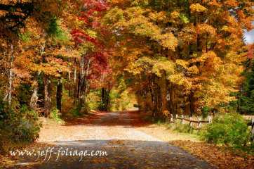 back road with fall foliage creating a tunnel of Vermont fall colors