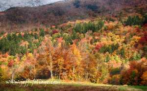 Vermont hillside aflame with a tapestry of fall colors in New England