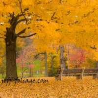 Fall Gallery Massachusetts