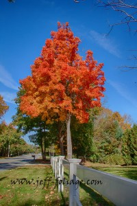 A maple tree all in it red and orange fall foliage colors in the quiet corner