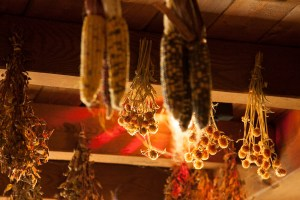 harvest corn drying - Massachusetts farms & Orchards