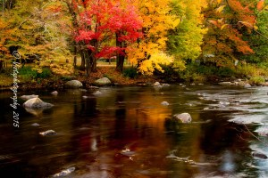 Fall colors on a stream in New England