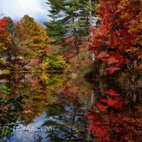 July fall foliage comment to win