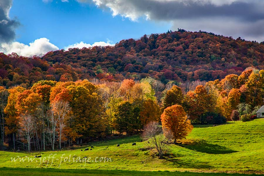 Pomfret Vermont fall foliage report