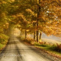 2017 fall foliage forecast in New England