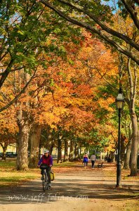 Salem common pathways in autumn