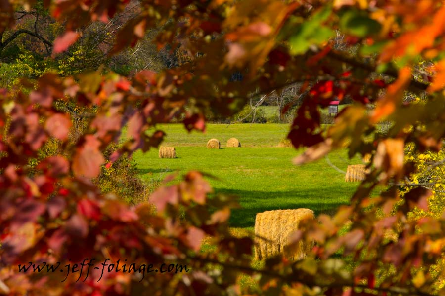 Easton NH fall colors with a view of hay bales in a farmers field. Just off Route 116 in Easton New Hampshire.