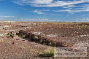 Petrified-Forest0217