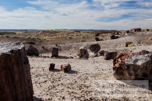 Petrified-Forest0245
