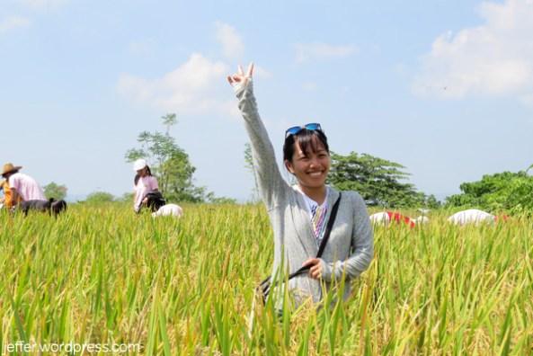 Paying a visit in a ricefield at Bulala, Sablan.
