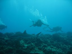 second-dive---reef-and-shark-dive-20_213816633_o