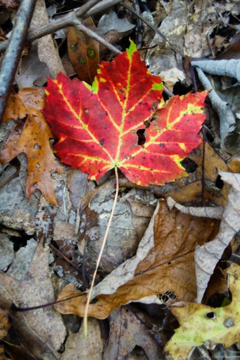 2012-10-06-climbing-at-the-gunks---dsc08067_8065796360_o