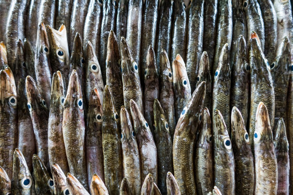 Fish at the local market