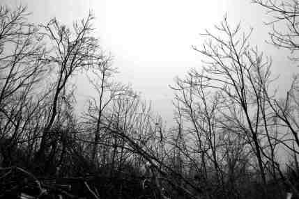 Jeffrey Saltzgiver Photography - Fine Art
