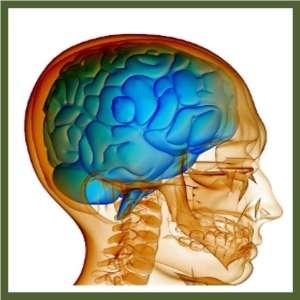 Brain Health Schemata