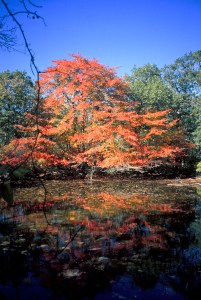 Photo from Harriman Sate Park, New York